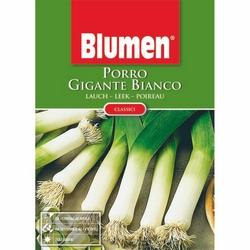 BLUMEN - Porro gigante bianco