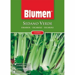 BLUMEN - Sedano verde