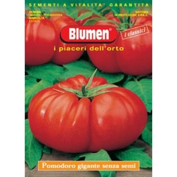 BLUMEN - Pomodoro gigante senza semi